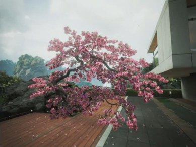 Zen Garden 11