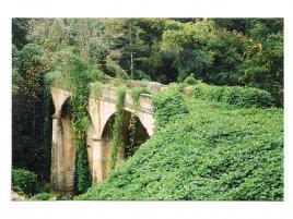 Ivy Bridge - Břečťanový most
